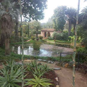 Lotus Land Gardens Pond