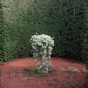 Lotus Land Gardens Succulent Fountain